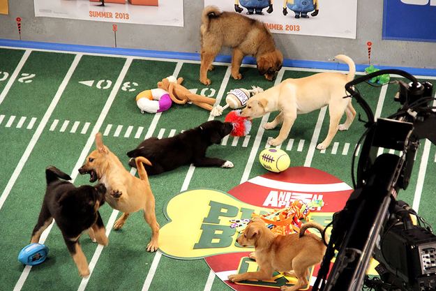 Puppy Bowl1391112766 76 puppy bowl jokes by professional comedians!